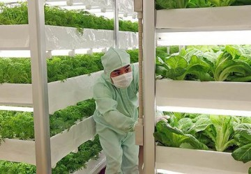 无农药蔬菜就是有机蔬菜吗